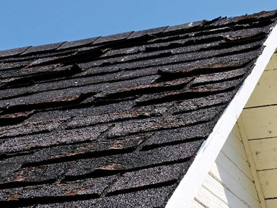 Tiger Roofing Images
